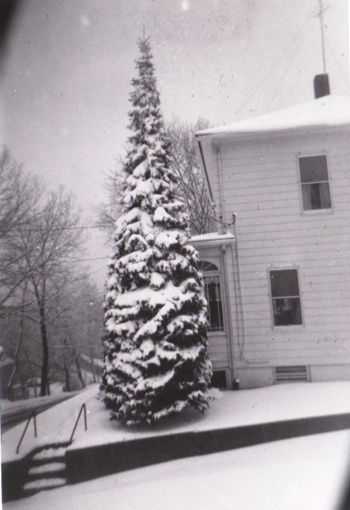 Poisson Christmas Tree 1950
